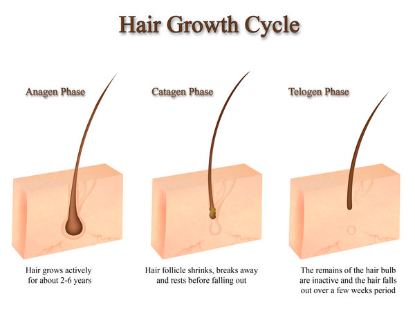 Follicle one of growing hairs multiple out Why are